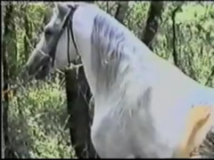 หนังxเย็ดสัตว์ เก่ามากสาวผมหยิกเข้าป่าเย็ดกับพี่ม้าสีมอกตัวขาวควยยาว เอามายัดหี